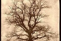 Southern Mystery / by Cameron DeArmond