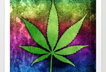 Growing Marijuana / Growing marijuana is a process that takes about 3 months. The most important things for growing the best weed is light, water and nutrients.