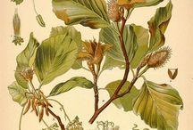 Flora & Botânica
