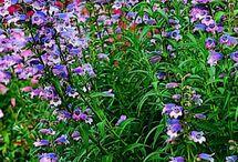 Garden / by Sherri Pembrook