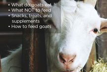 what to feed goats