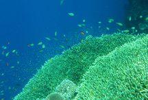 Menjangan Island Bali / Great place for snorkling and diving