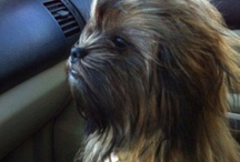 Wookies / by chow bacca
