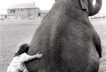 Larger Than Life / by Janbalaya