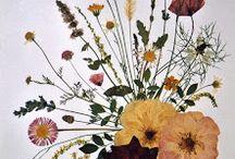 fiori presati