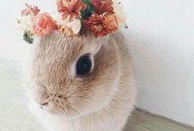 » crazy bunny lady