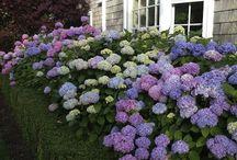 garden samping rumah
