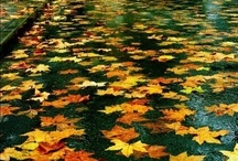 Fall / by Bailey Brannon