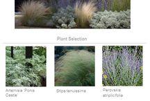 Pflanzen/Garten