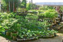 jardinage : pots bouturage ...