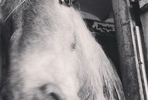 Horses / Because i love this big, cute and awesome animal