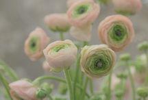 Flowers / by Audrey Lynn Weston