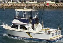 Types of San Diego Sport Fish / Learn what to expect when you go deep sea fishing in San Diego County on the Fish Taxi.