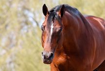 Equine Photography / Rules» Only photos with horses in it please. Post as many pictures as you want!