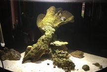 55g reef tank