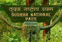 Journey to Dudhwa National Park