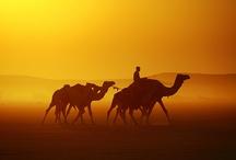 VBS-desert / by Joy Haken