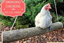 Around the Farm / Helpful tips ad ideas for the farm / by Southern Gals Cook