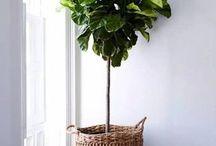 Plant in door