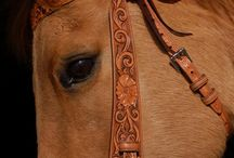 Horse / by Christa Hall