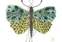 Bugs & Butterflies / by Wendy
