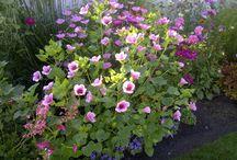 personal garden photos