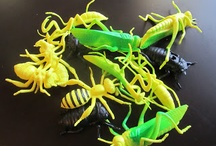 Bugs / by Sue Wardlow