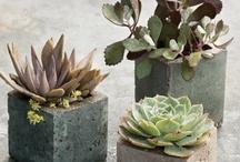 DIY concrete, hypertufa and plaster