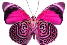 Butterflies / Real and styalised