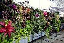 Vertical gardens / by del