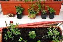 zahradniceni na pavlaci