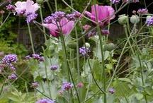 Garden / by Alison Bick Design