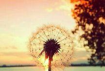 ミ❇彡Beautiful natureミ❇彡