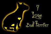 Bull terriers