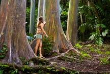 Family Fun in Kauai / Family-friendly activities on the island of Kauai in Hawaii. To view more and book, visit: https://www.peek.com/hawaii/kauai/category/family-friendly/