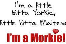 Morkie♥