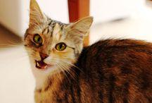 Inne zachowania kotów