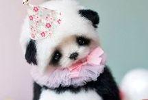 Очень милые панды