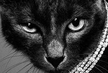 CATS AND JEWELRY