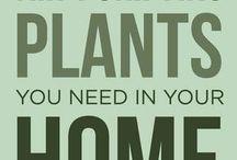 air purifier plant