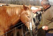 Rikki's Refuge Horses & Donkeys / Rikki's Refuge, Rapidan, Virginia, www.rikkisrefuge.org