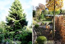 L'aménagement du jardin / jardinage