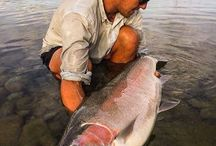 Fishing / Salt and fresh