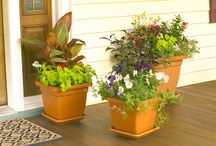 Patio Garden / by Gracie Dugan