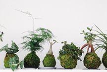 La Boutique-Atelier d'Ikebanart de Paris / Les créations végétales raffinées pour Noël