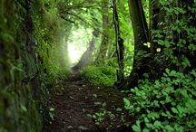 alberi e natura