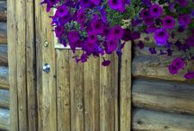 flori decorare cabana munte