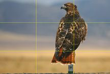Composition: rule of thirds