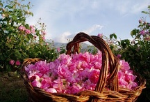 Bulgarian Rose Love Story-My Dida's Heartlines remain with the Roses / The Valley of Roses in Bulgaria are Majestic! Rosa Damascena became the greatest wealth in the Kazanlak region and a symbol of Bulgaria….with a long long history of the greatest love story's, potions and lotions.