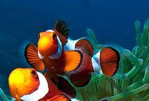 Beauty under the sea / by karen candlish